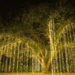 10 Best Solar String Lights 2021 - Led Solar Outdoor String Lights